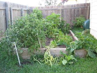 June 12 veggies 001