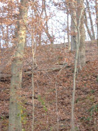 KY hike 053