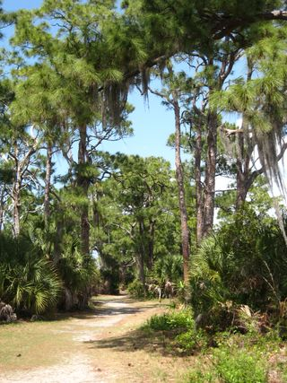 Honeymoon Island 047