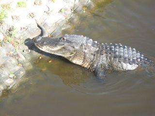 Myakka River State Park 053