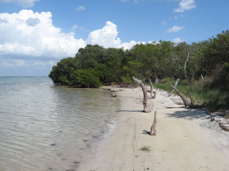 Honeymoon Island 061