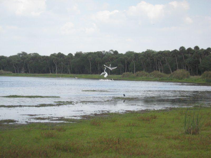 Myakka River State Park 120