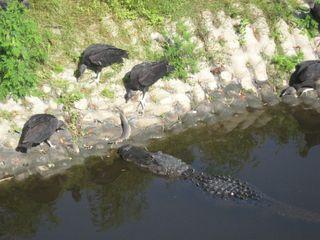 Myakka River State Park 049